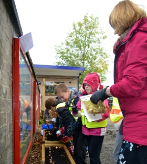 Primary school pupils planting spring bulbs at Bentham station